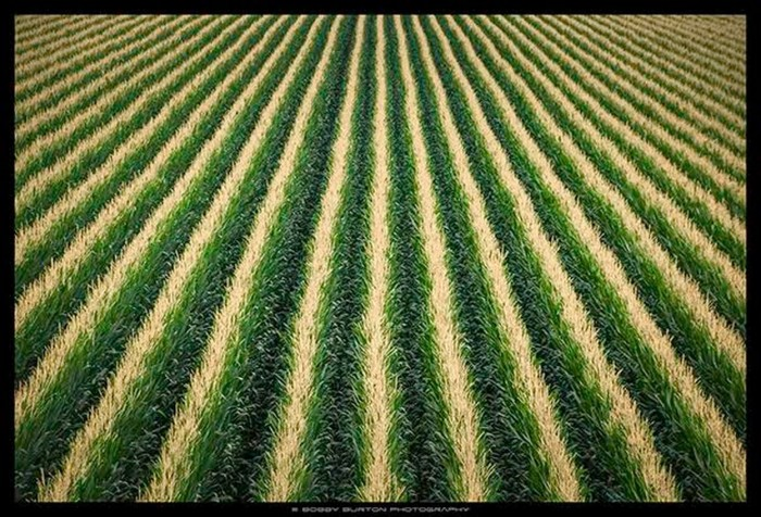 30. Rice Fields by Bobby Burton
