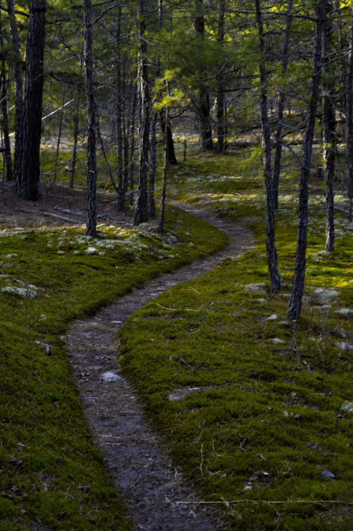 25. Sylamore Creek Trail by Sam Files