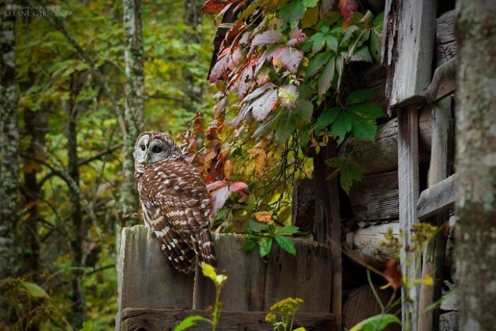 14. This owl at the Three Rivers Avian Center.