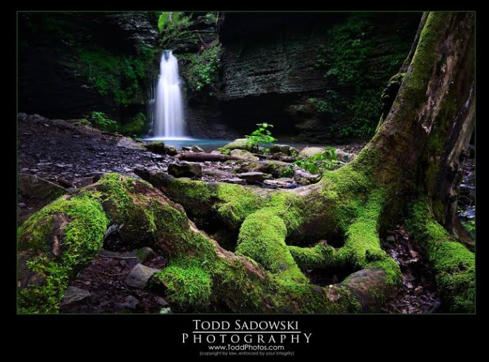 12. Fuzzy Root at Fuzzy Butt Falls by Todd Sadowski