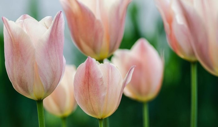 3. Chad Ashton got a lovely shot of some tulips somewhere in West Virginia.