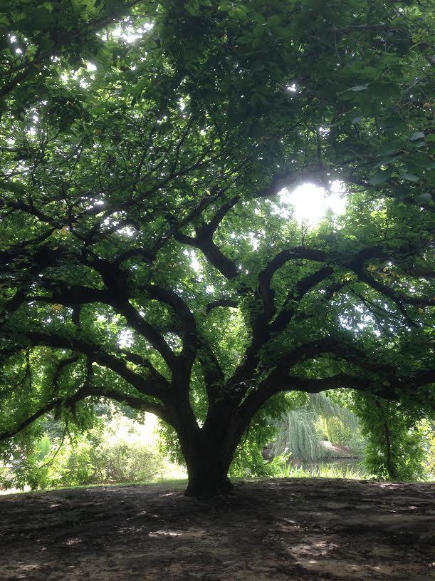 2. A tree grows in Botanica (Wichita).
