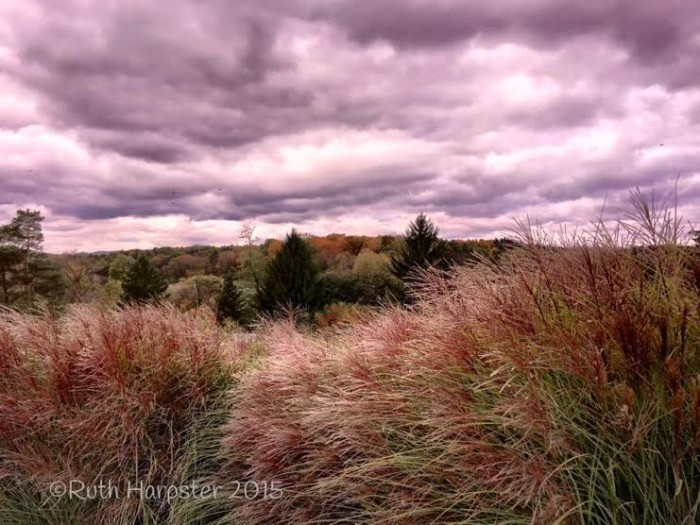 """4. Ruth Harpster writes, """"I was standing along one of Penn State's farm roads near one of the turf grass research plots (to my back) and looked across Route 322 to see the beautiful fall colors beginning to show."""""""