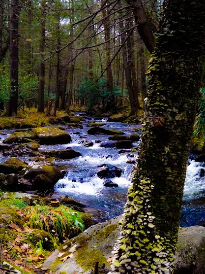 5. The river looks alive in this beautiful photograph taken at Poe Paddy State Park.