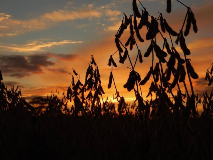 2. Golden sunset over a London, OH field with dust from harvest