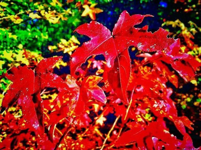 25. Shades of Autumn Red by Vaquessa Adams Sartin