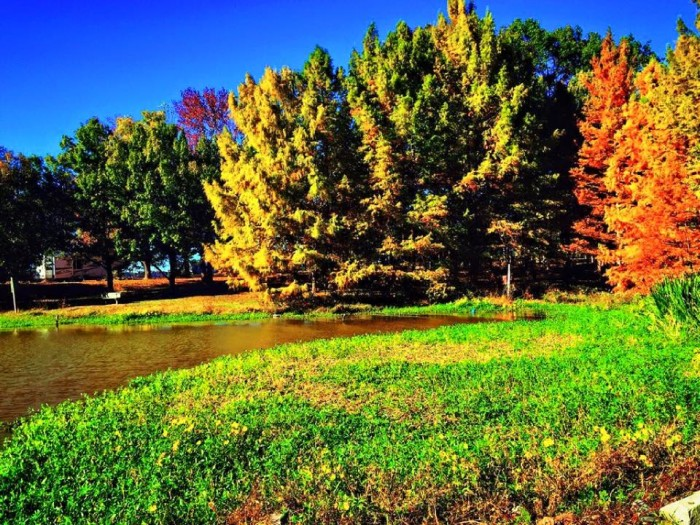 10. Fall Foliage by Vaquessa Adams Sartin