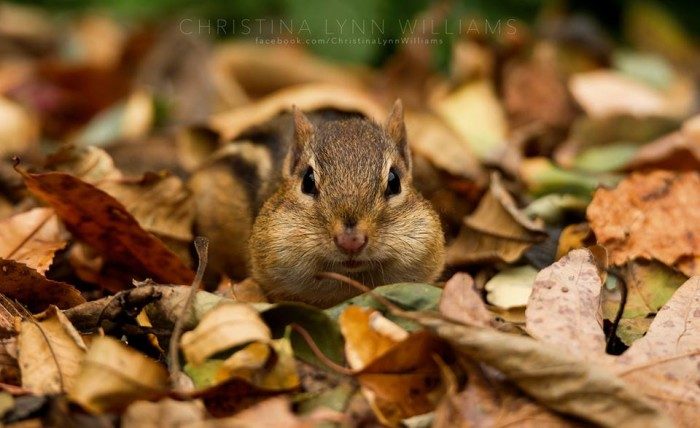 10. Check out this little guy that Christina captured among the leaves in Northern Illinois.