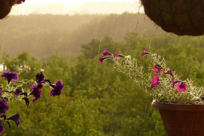 9. Isn't it gorgeous when it rains while it's sunny--like this shot taken in Black Brook Township?