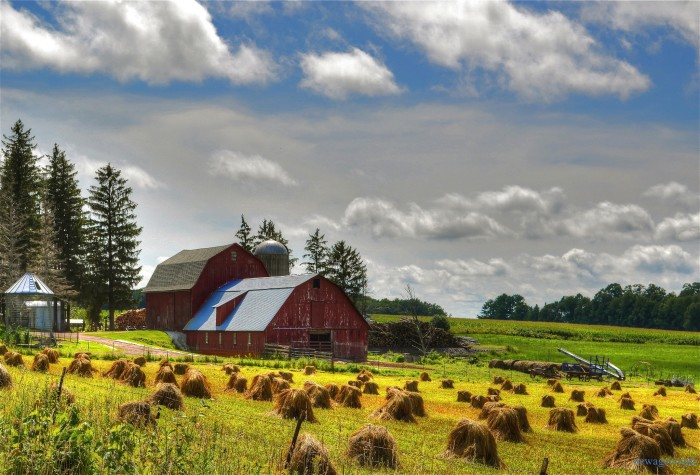 14. Check out this sun-kissed working farm in Clark.