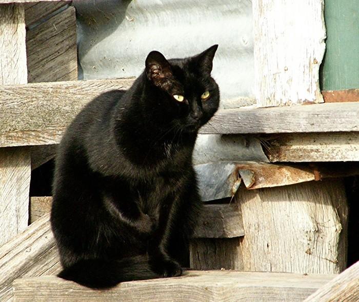 2. Black cat of 1969