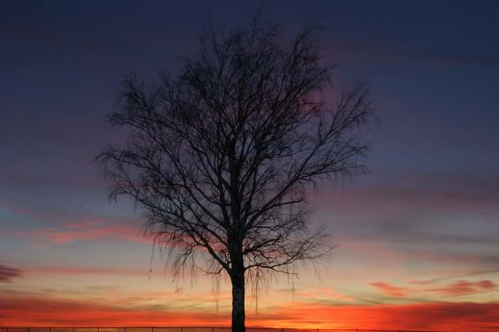 6. Isn't this shot of a tree at sunset gorgeous?