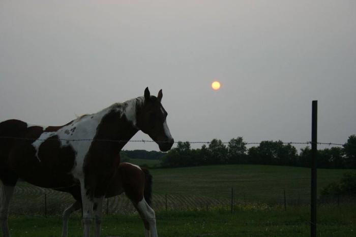 2. A horse prepares for evening.