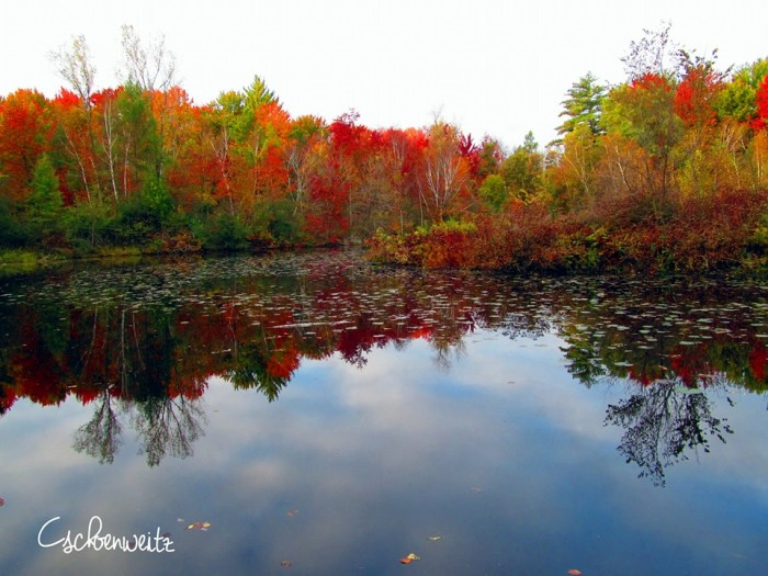 12. What wonderful fall foliage at Rustic Woods Campground.