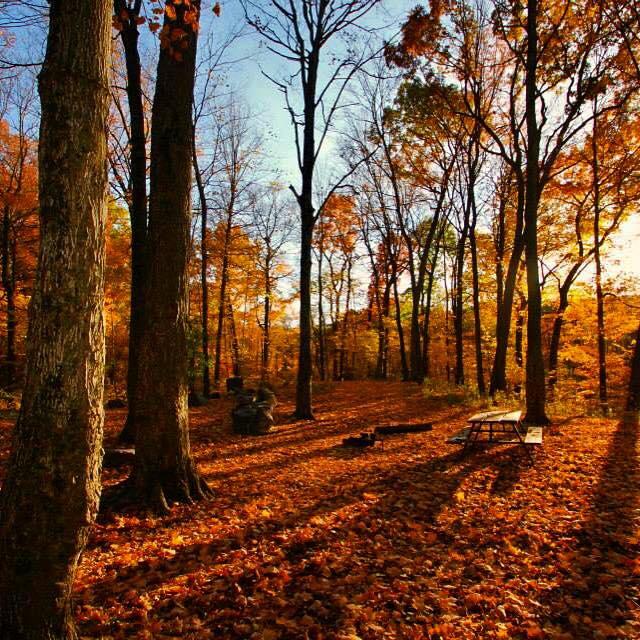 16. Beautiful picnics can be had in fall.