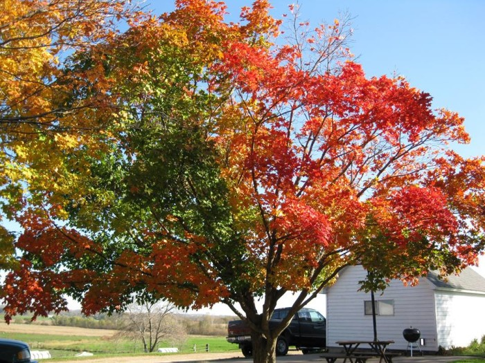 17. Who knew one tree could have so many colors?