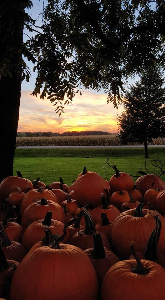 16. There were obviously plenty of pumpkins to be picked in Milton.
