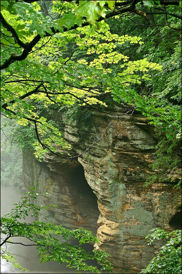 17. The mist and light rain make Matthiessen State Park look a little like the jungle.
