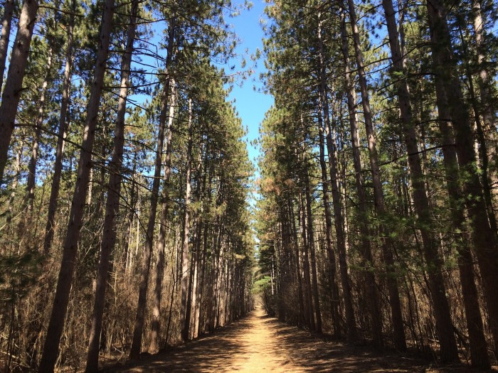 7. Kettle Moraine State Forest