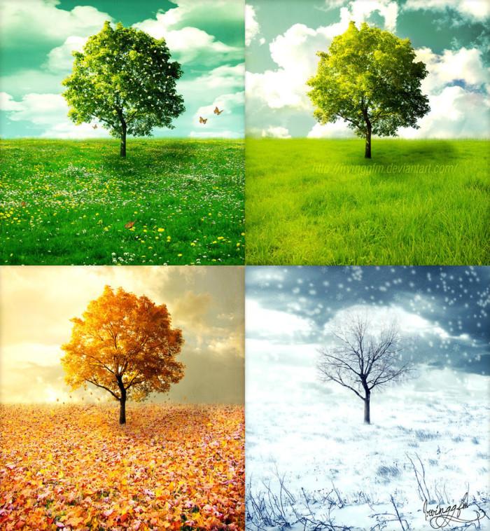 1. The seasons and foliage.