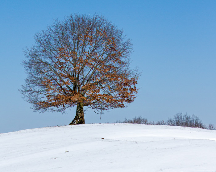 10) The lone wintry tree