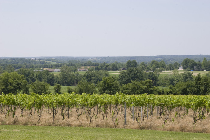 10. Wineries and vineyards.