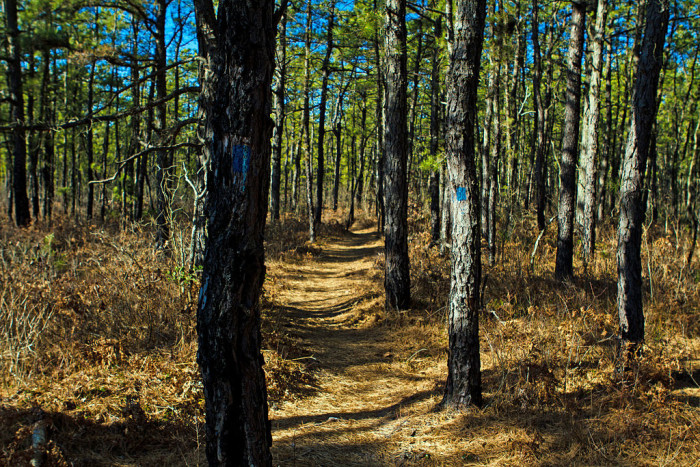4. The New Jersey Pine Barrens.