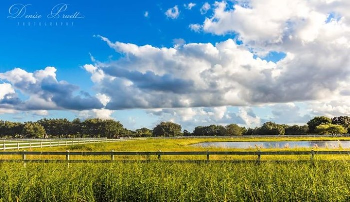 1. Thanks to Denise McDaniel Pruett for this photo of a country road in Buckingham, Fort Myers
