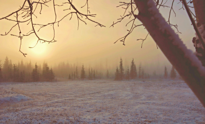 5) There is something mystical about morning fog, isn't there?