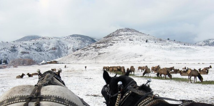 5. Hardware Ranch, Blacksmith Fork Canyon