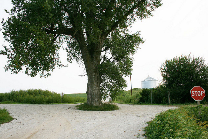 10. The tree in the middle of the road, Cass County