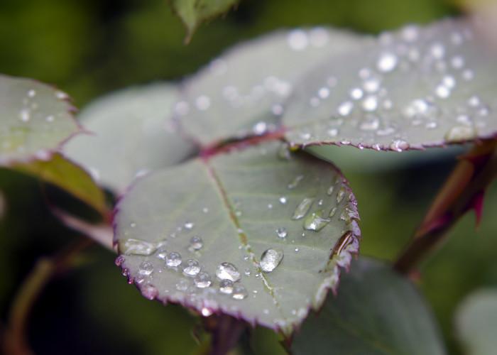 2. The rain