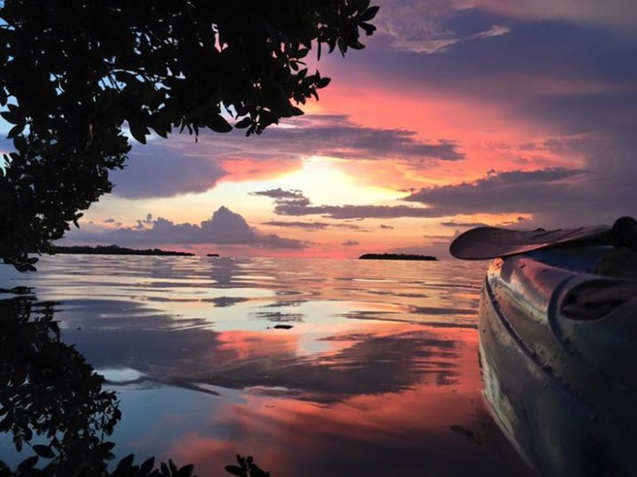 2. Jeanne Freels Hall captured this incredible moment while sitting in the mangroves on her kayak in the Keys