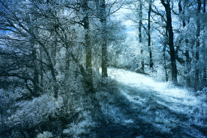 4. The forests seem much more enchanting and intriguing.