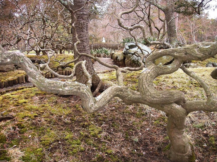 10. Sister Mary Grace Burns Arboretum, Lakewood