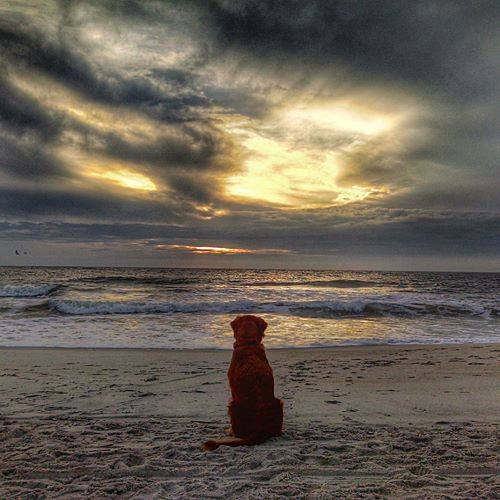 "15. Susan Applegate shared this photo she captioned ""a dog's salt life""."