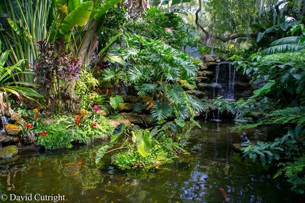 8. Thanks to David Cutright for this lovely shot of the Marie Selby Botanical Gardens in Sarasota
