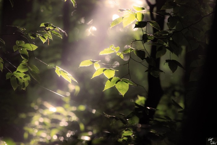 2. A single ray of light shinning through the Jackson-Washington State Forest.