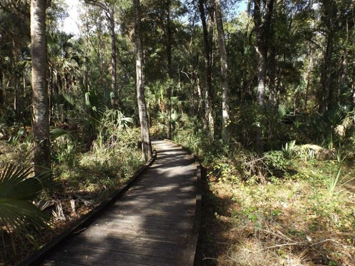 14. Lori Gilman Manning captured this inviting scene on the Churchhouse Hammock Trail at Crystal River Preserve State Park