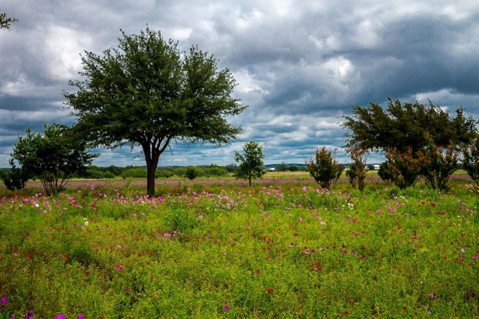 12) A tranquil setting at Wildseed Farm in Fredericksburg, Texas!