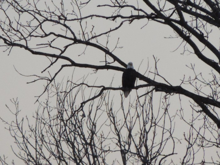 15. Kim Barker was lucky enough to capture an eagle at Eagle Marsh in Fort Wayne! Neat!