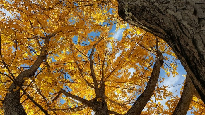8. Ryan Hostetler has reminded us what fall looks like with his picture taken somewhere in Indiana!