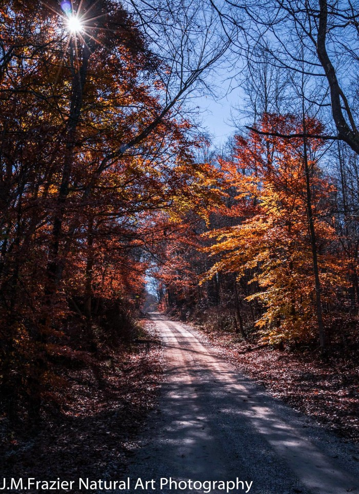 7. Jeff Frazier took an incredible picture of a backroad in Lawrence County. Who knew a backroad could be so pretty?