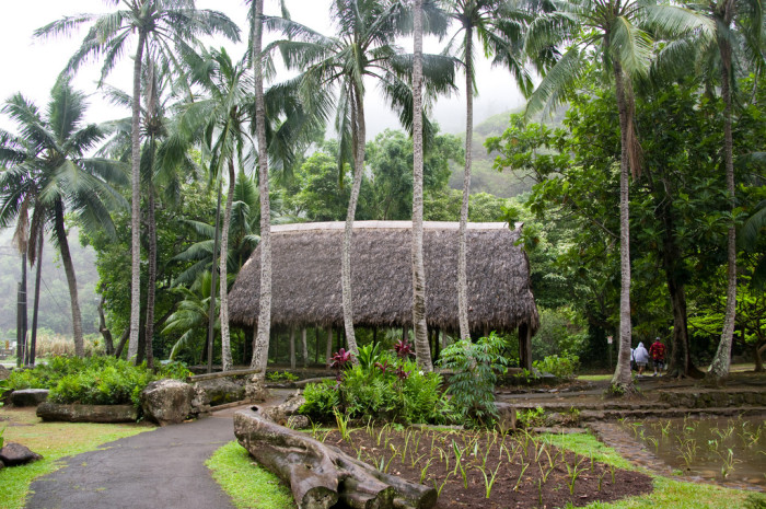13) Do you live in a grass hut?