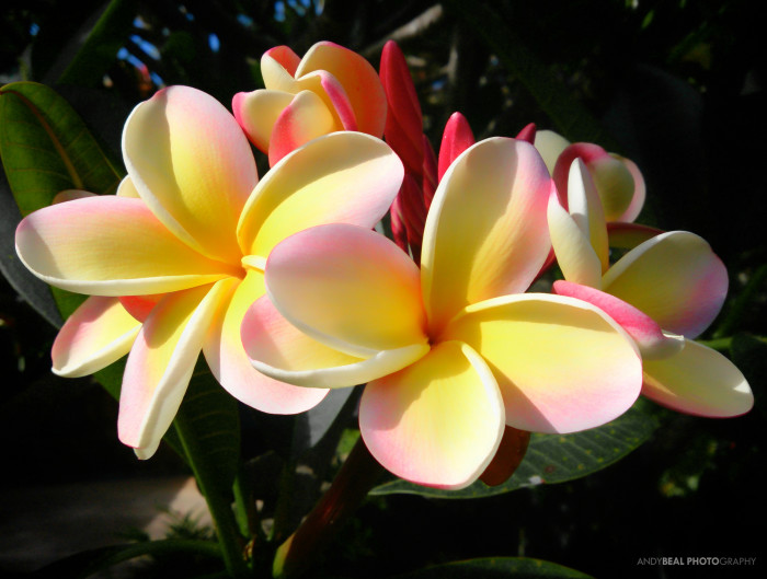 13) Tropical flowers.