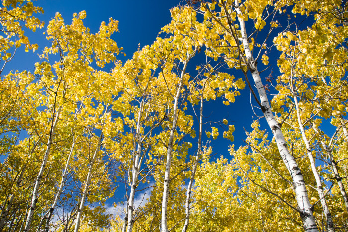 6. The Caribou WMA in northern Minnesota is home to some of the most spectacular aspen parkland.