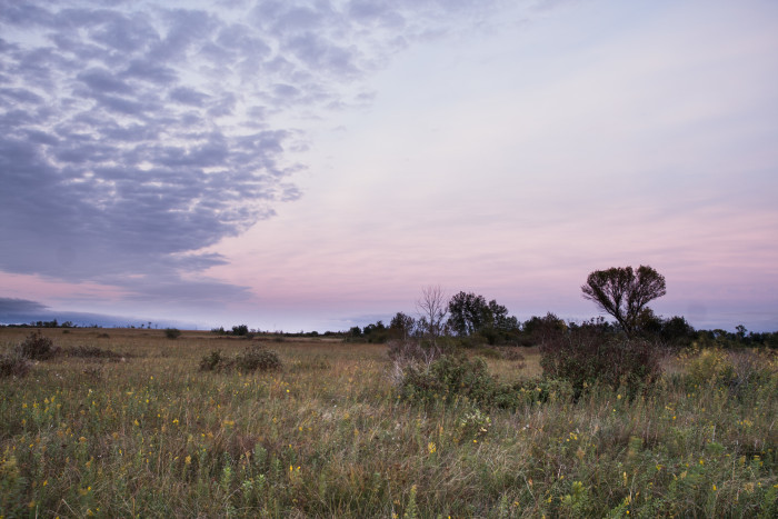 2. Bluestem Prairie SNA in Northwestern MN is 1,310 acres of heaven in the middle of a massive conservation area.
