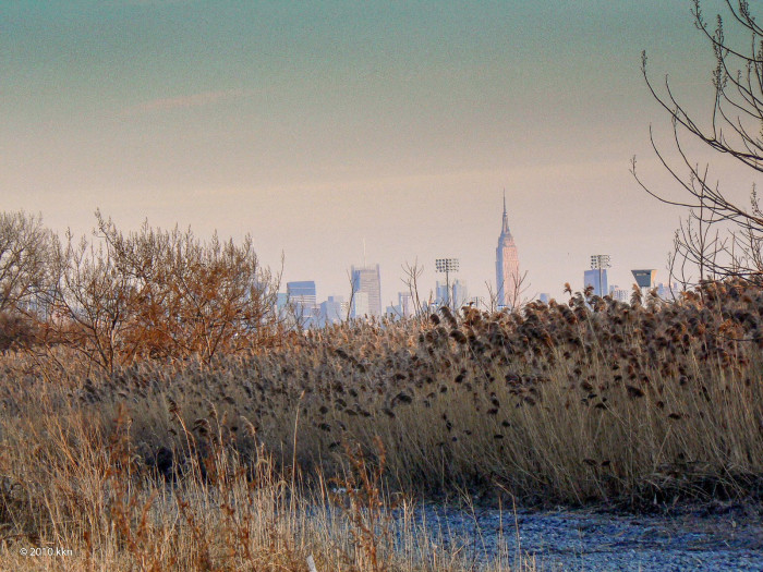 6. The marshes and swamps of the Meadowlands.