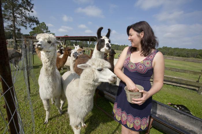 9. Chantilly Ridge Alpaca Farm, Port Orange