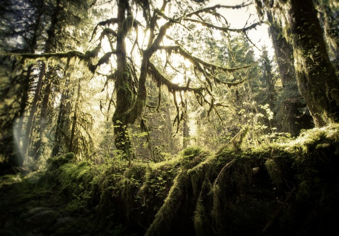 6. The only temperate rainforests in the continental U.S. can be found right here on the Olympic Peninsula.